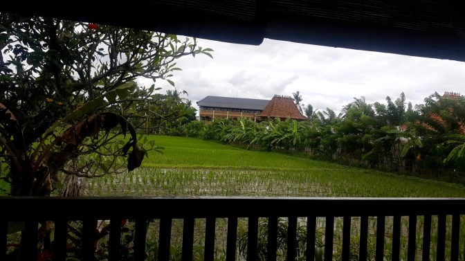 The view from one of the restaurants - rice paddies!
