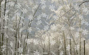 Image result for Snow Spell
