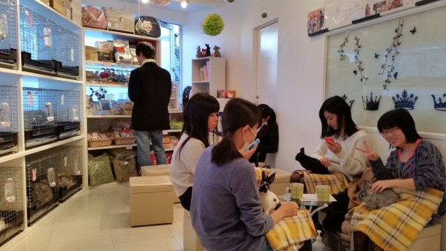 Bunny cafes by the Travel Sisters