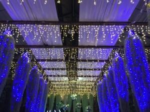 神戸どうぶつ王国ライトアップ