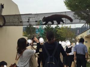 京都市動物園のレッサーパンダ