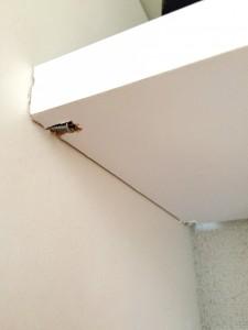 ネジを使って余っていた板を棚に変身させる
