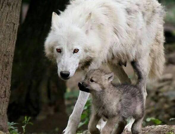 Äitiydestä