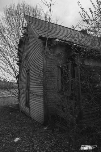 Beechgrove08bw