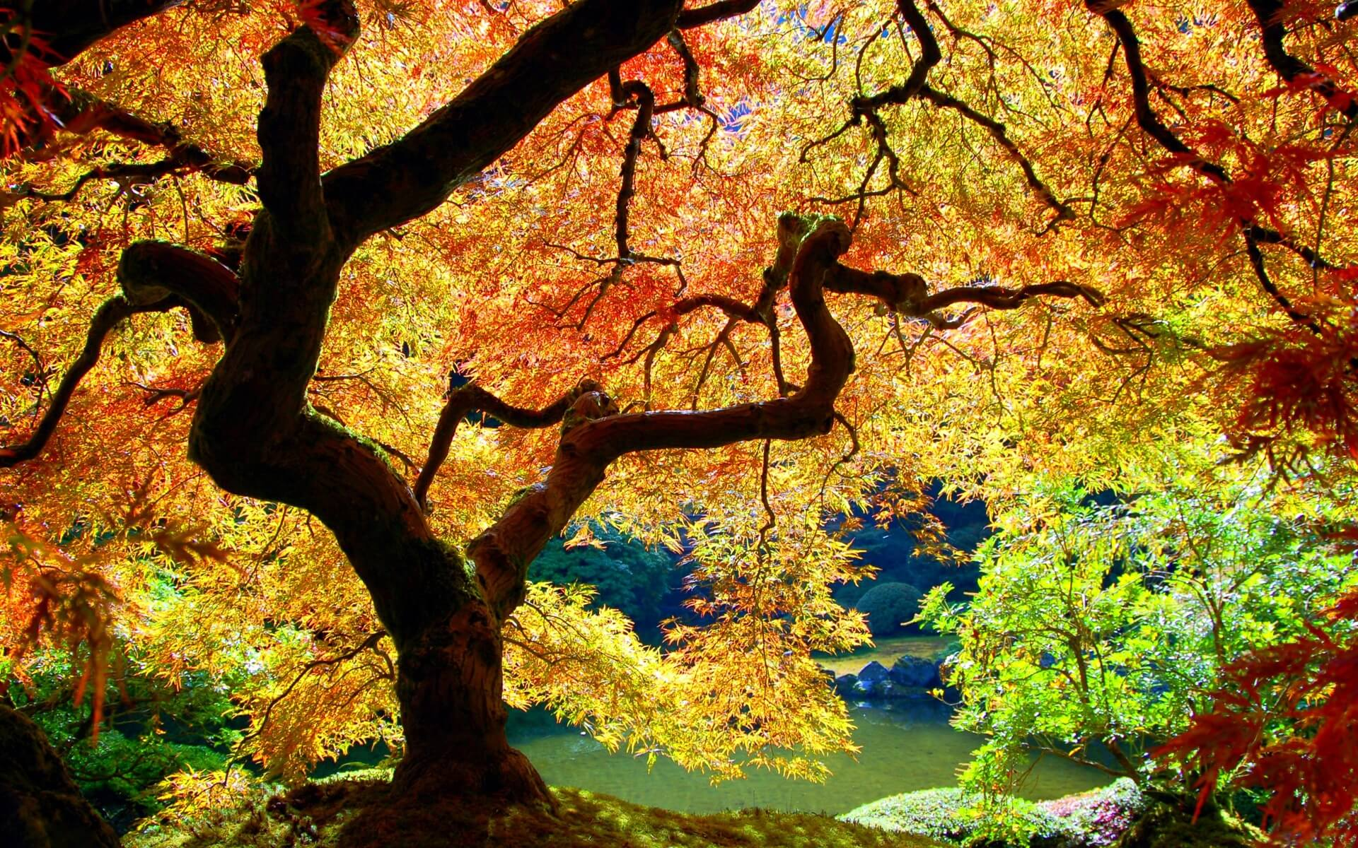 Autumn Wallpapers (29)