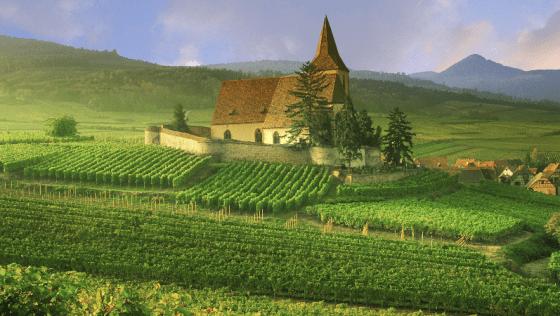 http://wallpoper.com/wallpaper/france-vineyard-426800