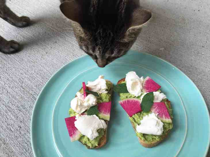 Avocado Burrata Toast + Luna