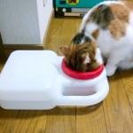 """猫に """"こぼれない水飲み器""""「ブリングウォーター」を買った"""