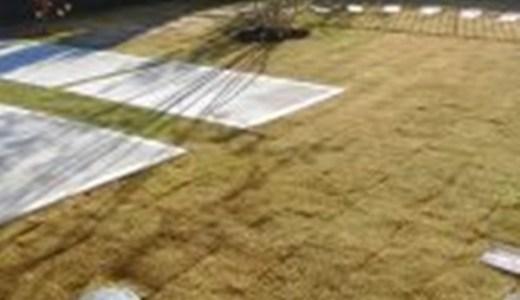 水戸市にて芝張り施工しました