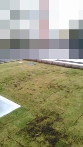 水戸市芝張りTM9施工例