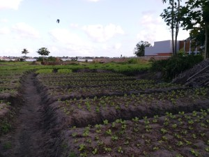 K in Motion Travel Blog. Cote d'Ivoire. Local Farming Fields