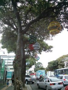 K in Motion Travel Blog. Mountain Adventures in Costa Rica. San Jose. Festive Trees
