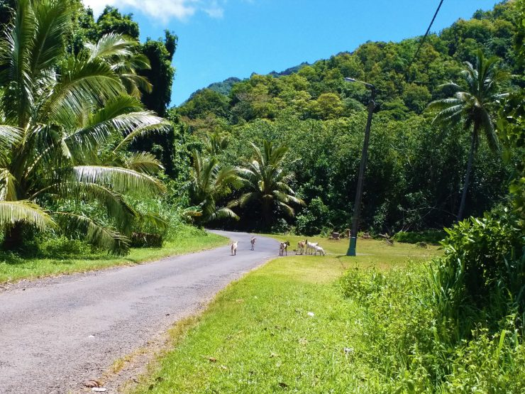 K in Motion Travel Blog. The Captivating Cook Islands. Starting The Cross Island Walk