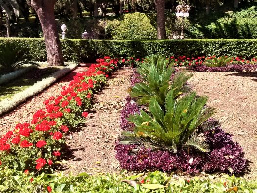K in Motion Travel Blog. Historic and Natural Places to See in Northern Israel. Red and Purple Flowers at Baha'i Gardens
