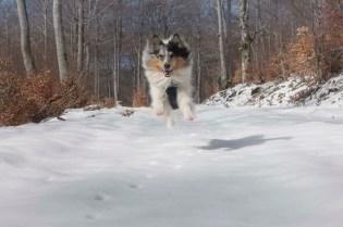 Un poussin volant !
