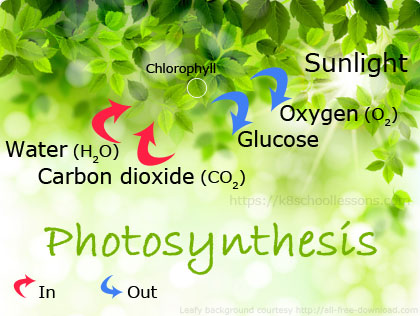 Photosynthesis For Kids What Is Photosynthesis Photosynthesis