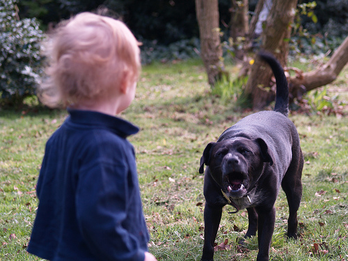 Dog aggression and children don't mix