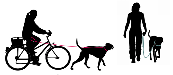 Taking your dog out into the world for training