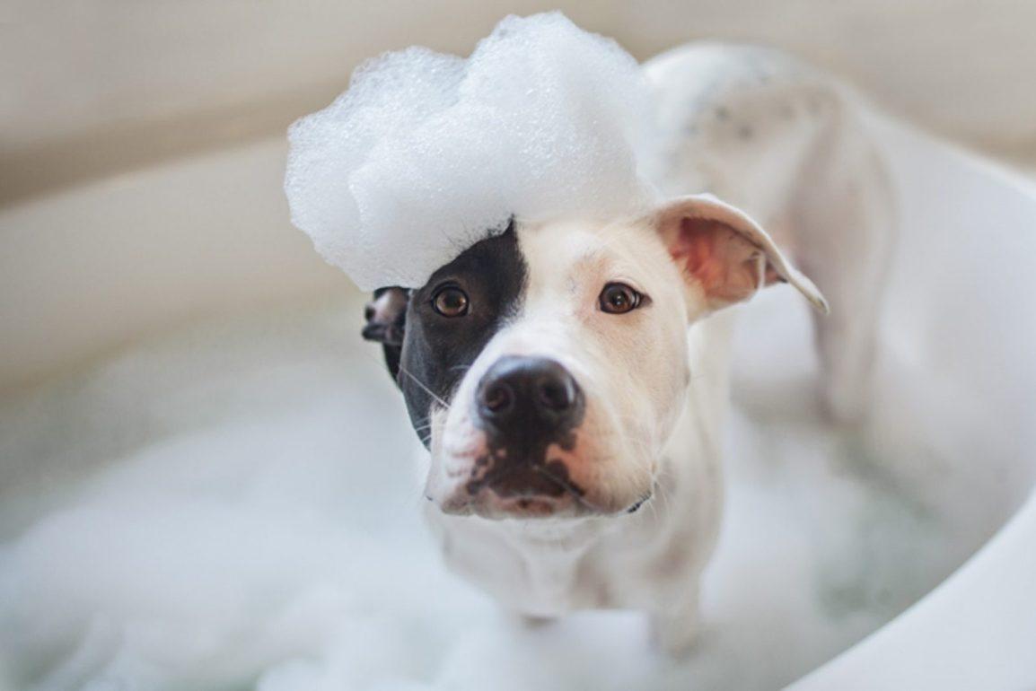 Self Serve Dog Wash Services