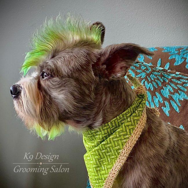 K9 Design's Creative Grooming Green Mohawk