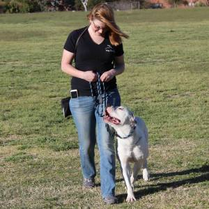Dog Training Tuscon AZ
