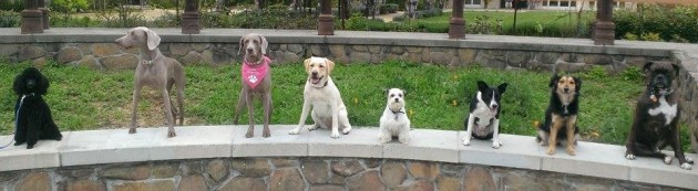 Group Dog Training Classes for Tucson, AZ