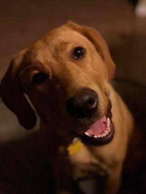 Forney, Texas Dog Training