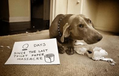 best dog shaming images