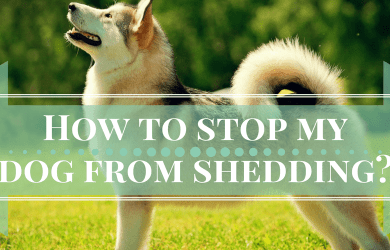how to stop dog from shedding