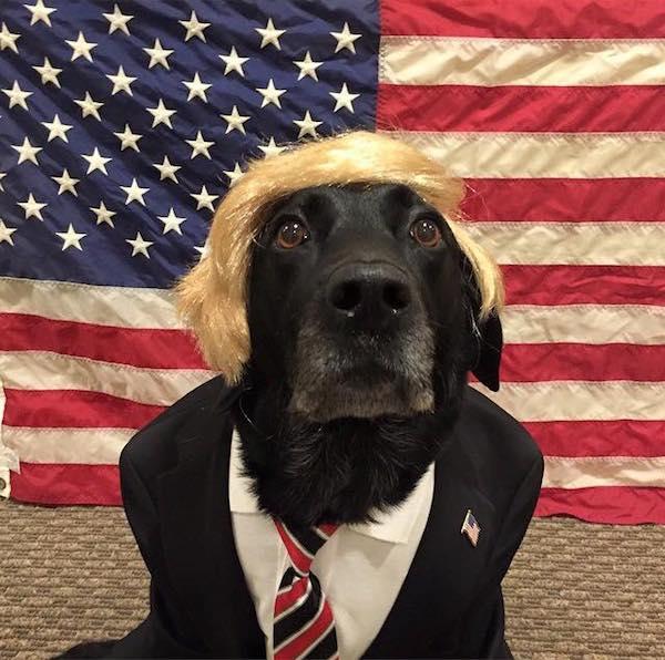 donald trump dressed dog