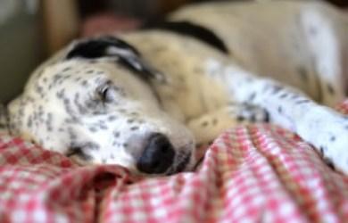 best heating dog beds