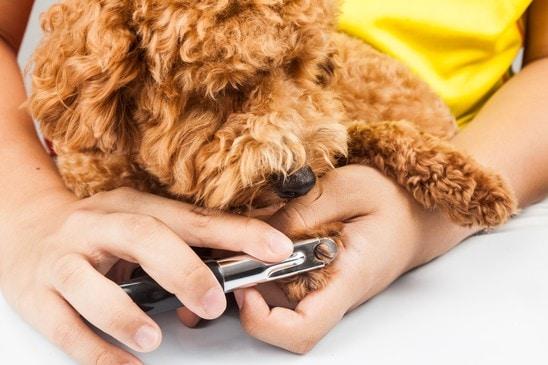 dog nail grooming clipper