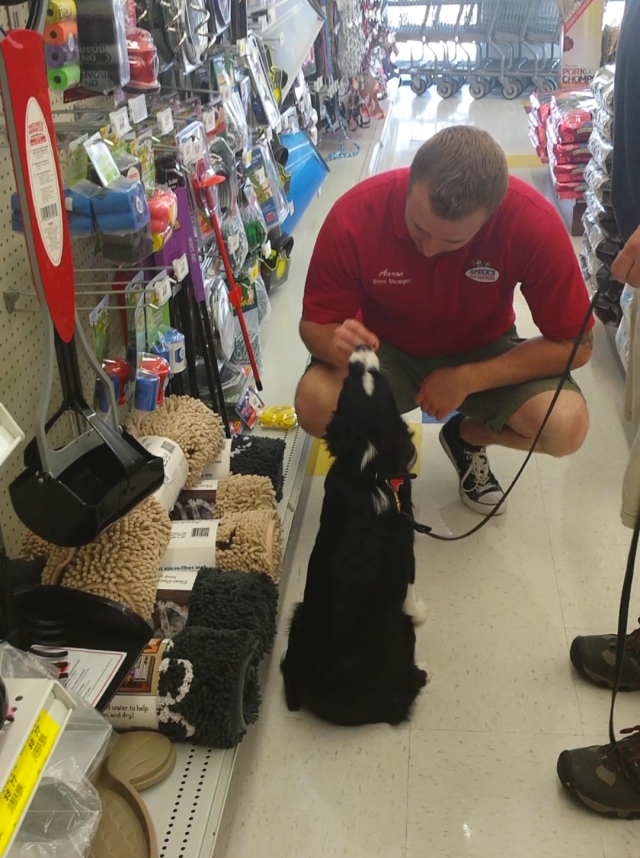 Addy applies his Urban Canine Good Citizen at a pet store in Carmel, Indiana