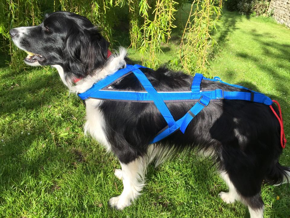 Dog Sport Harnesses For Dogs Who Really Pull K9 Trail Time