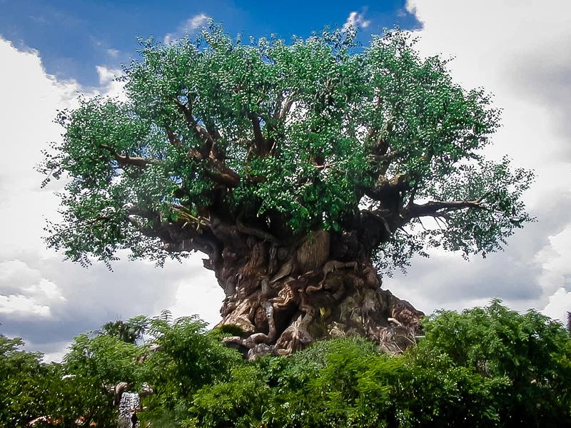 Disneyworld Tree of Life