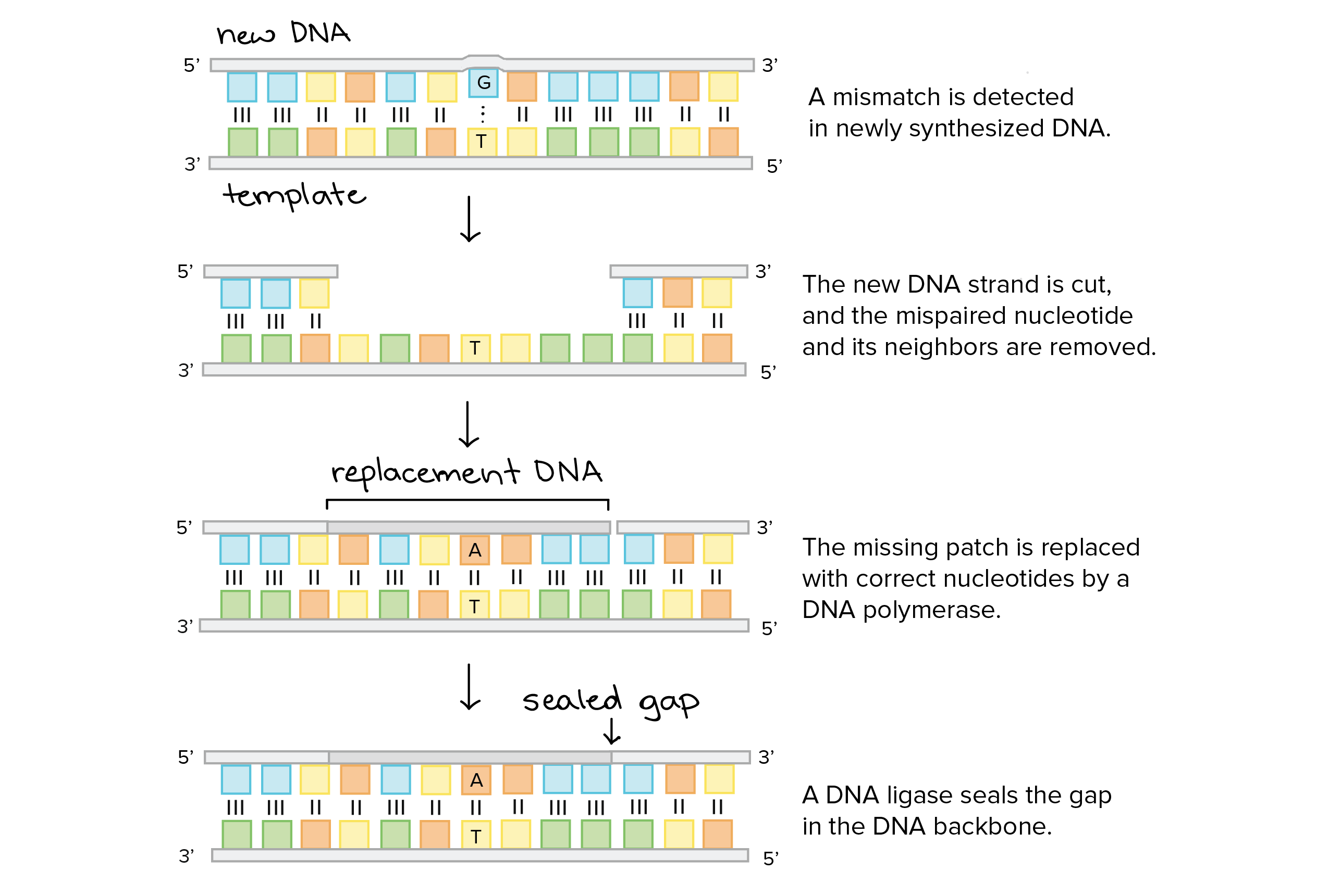 Molecular Genetics Definition