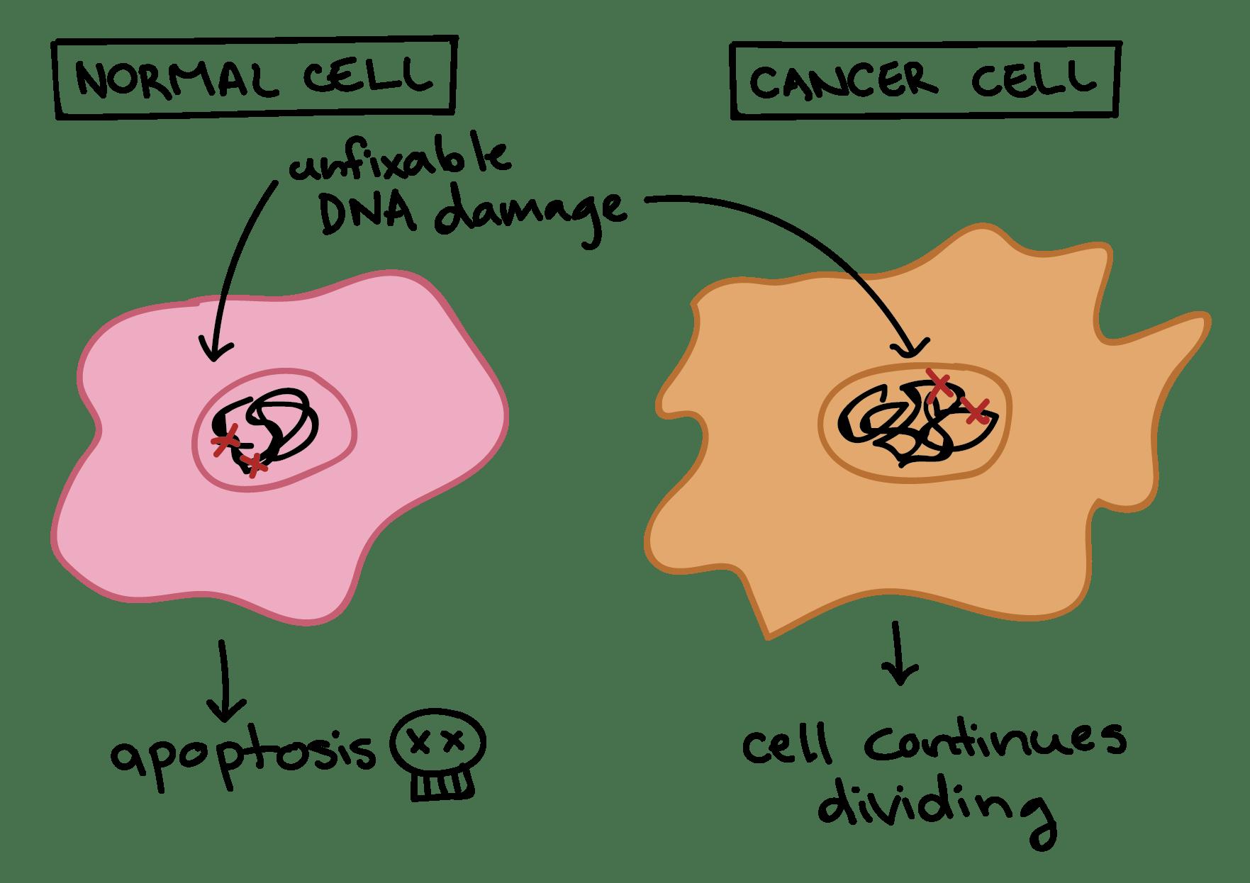 Definition Of Malignant Tumor