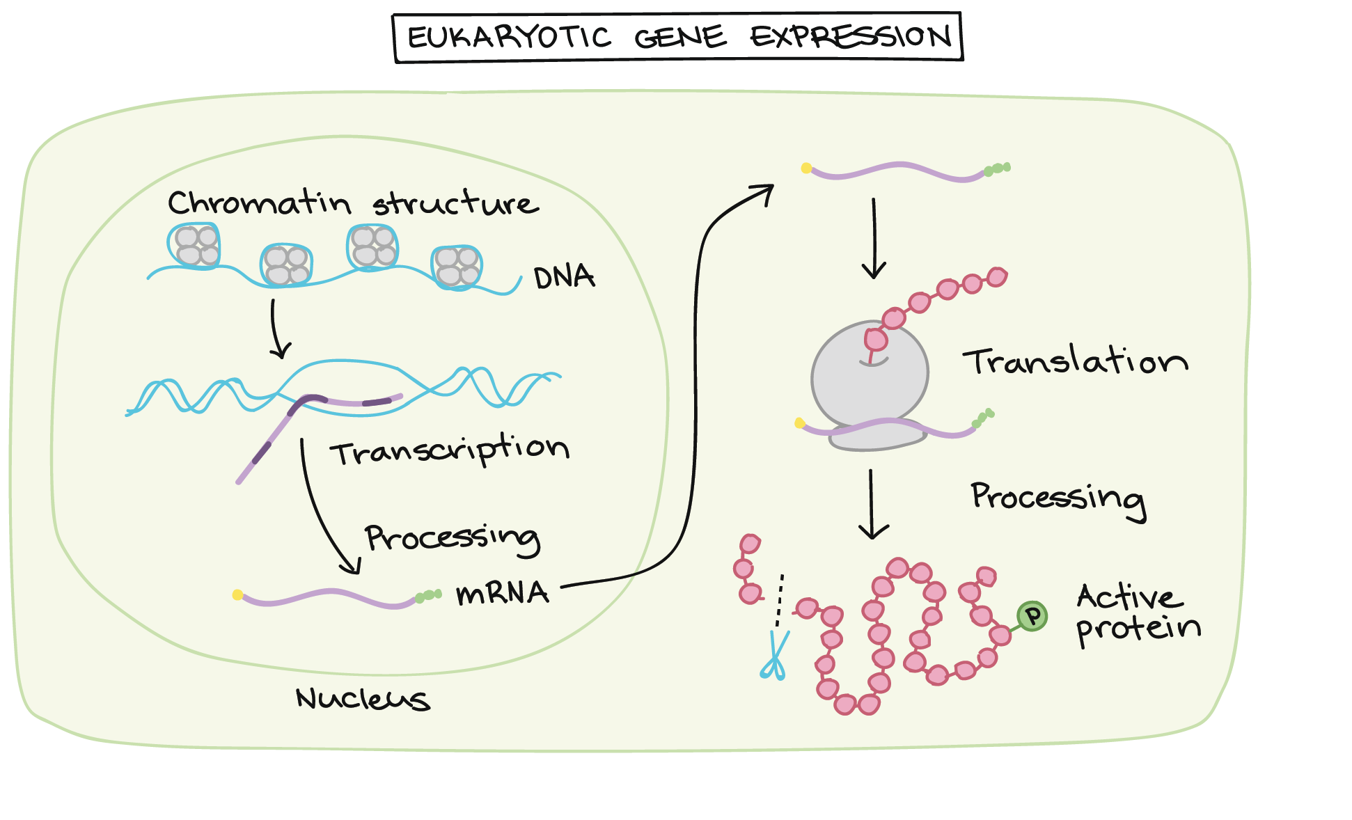 Essay About Gene Expression