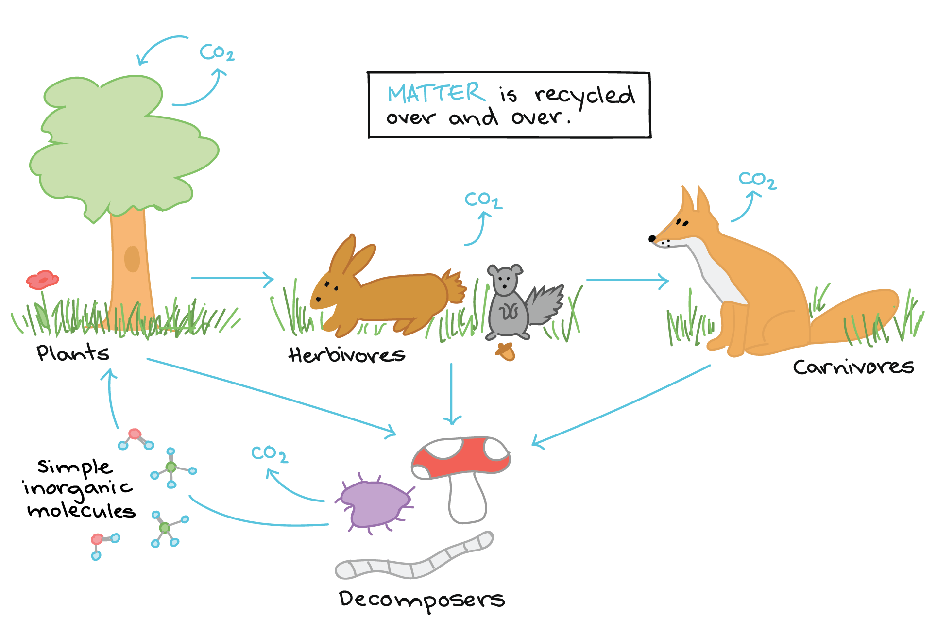Animal Ecosystem Cycle