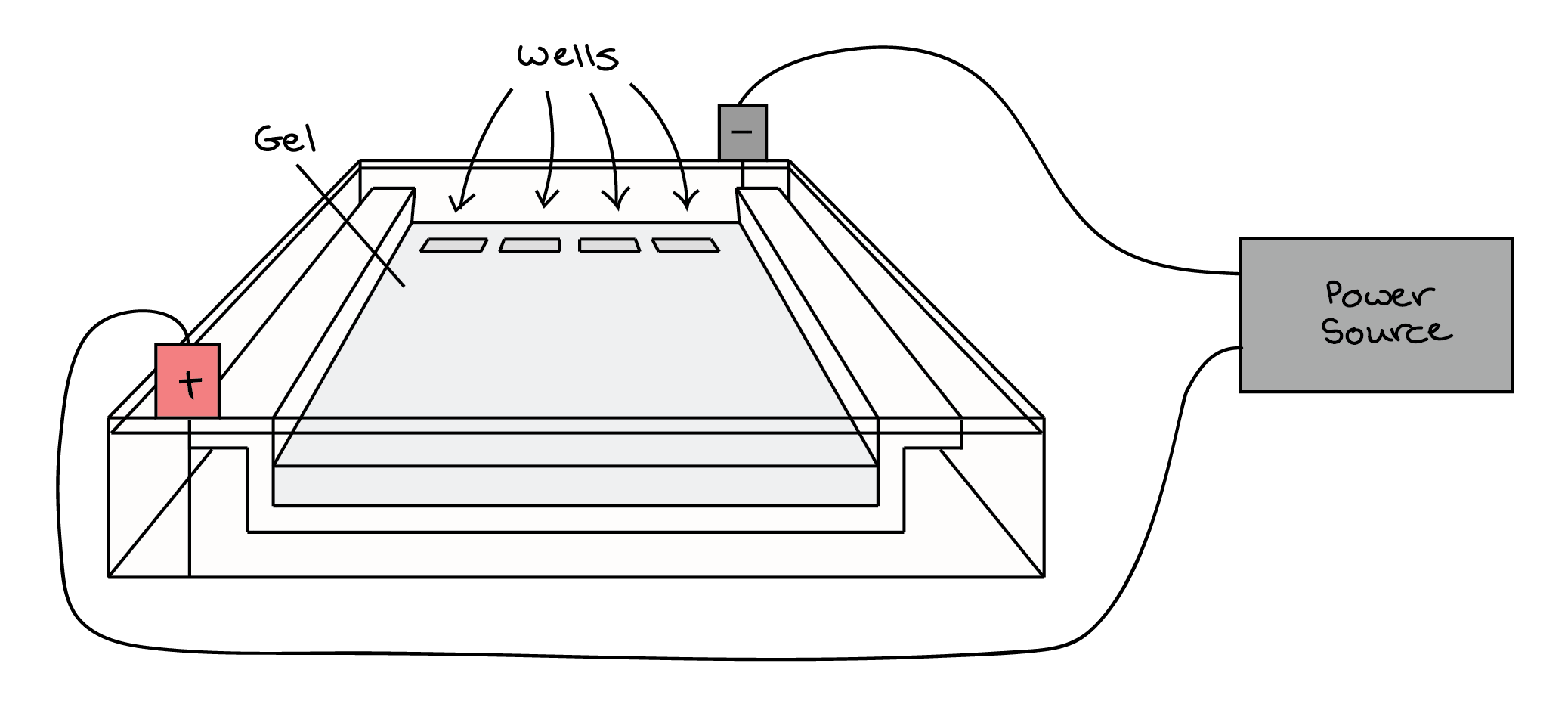 9biopinos Gel Electrophoresis Virtual Lab
