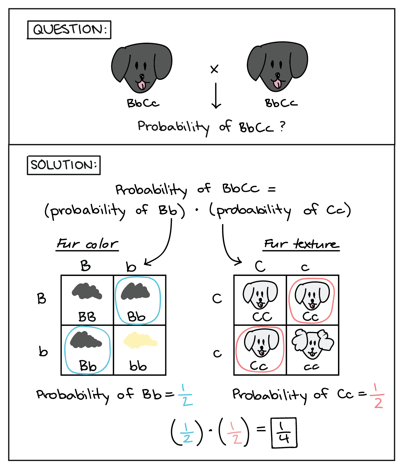 Probability And Punnett Squares Worksheet Answers