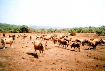 Journée des éleveurs: diagnostic et promesses en perspective