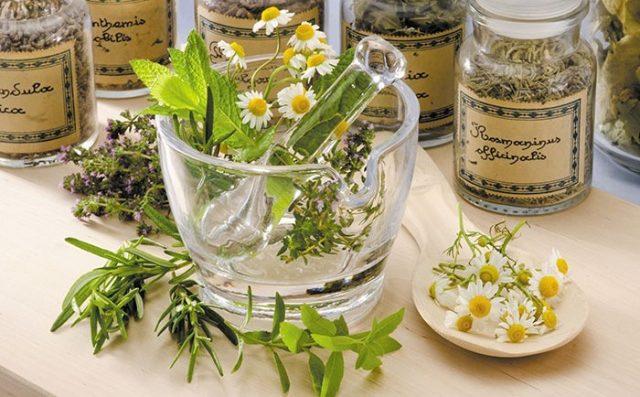 Valorisation des plantes médicales : un souci pour le gouvernement ?