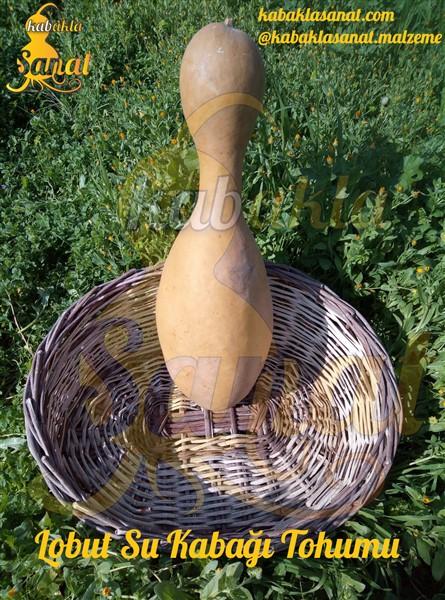 lobut su kabağı tohumu