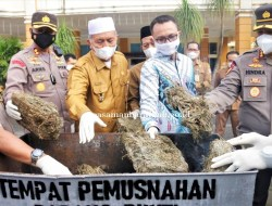 Pemusnahan 25 Kg BB Ganja, Pemkab Pasaman Barat Dukung BNNK dan Polres Berantas Narkoba