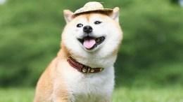 Dogecoin (DOGE) Akan Menjadi Koin Favorit