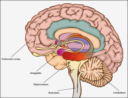 d_hyppocampus & whole Brain