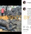 [KLARIFIKASI] Unggah Foto Kejadian Tahun 2016 Orang Utan Mati Terpanggang, Warga Aceh Minta Maaf