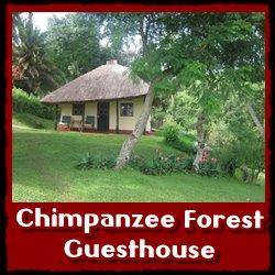 Chimpanzee-Forest-Guest-House1