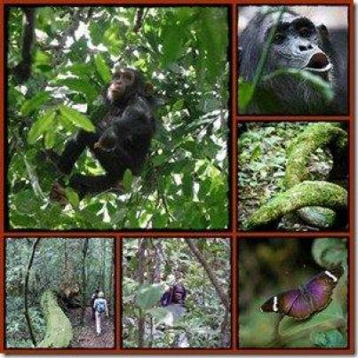Things to do and see in Budongo Forest